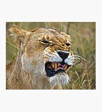Lion's Mimic Photographic Print