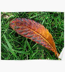Leaf Magic Poster