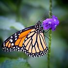 Monarch and Purple  by Linda Makiej