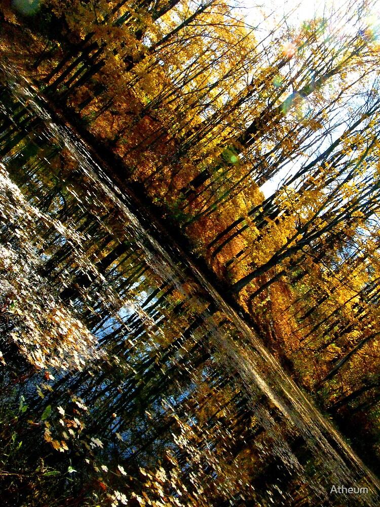 Autumn Gold  by Atheum