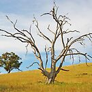 GHOSTLY GUM by Helen Akerstrom Photography