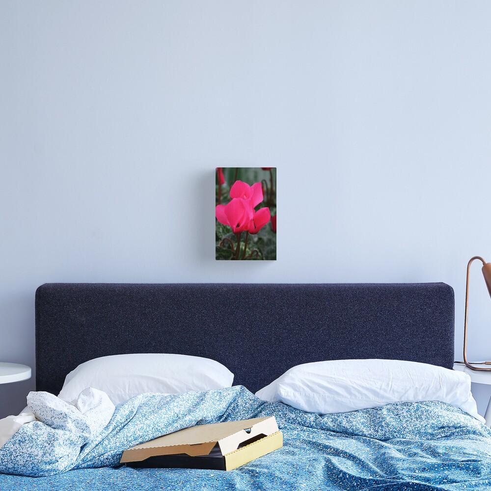 Cyclamen Canvas Print