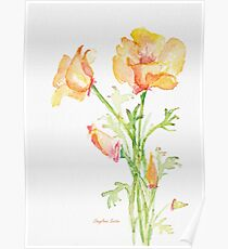 Bunch of California Poppies Poster