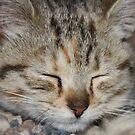cat nappin' by natnvinmom
