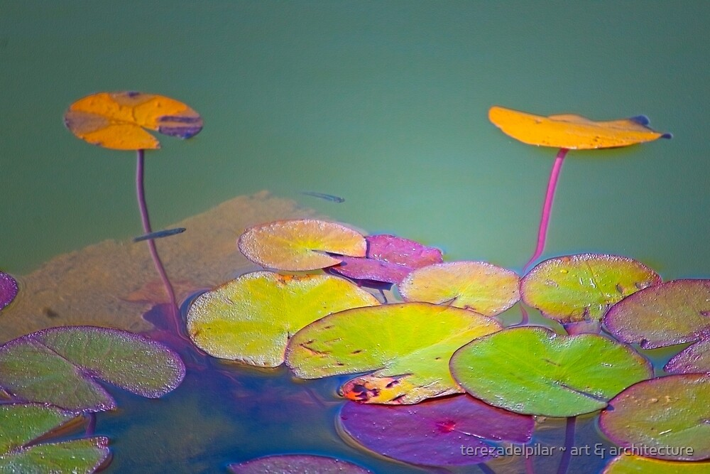 lotus floating leaves by terezadelpilar ~ art & architecture