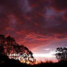 Roaring Sunset by Steve Chapple
