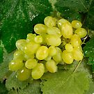 Wet grapes with water drops on a background of leaves by vladromensky