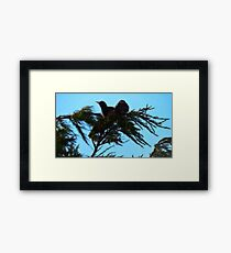 Sunbathing Birds Framed Print