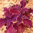 Purple Plant by CDNPhoto
