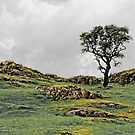 Lonely Tree by Kerry Lunt
