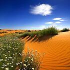 0659 Lebende Wüste im Frühling von Hans Kawitzki