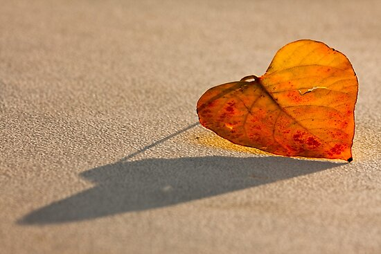 AUTUMN HEART by Sandy Hill