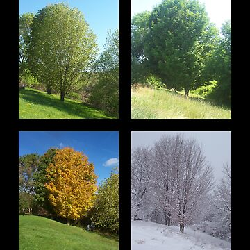 The Four Seasons by PASpencer