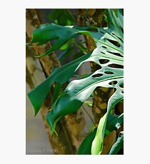 Shadow Leaf Photographic Print