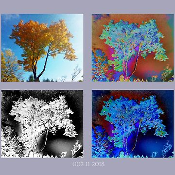 Four autumn's trees 002 11 10 2018 by algirdasdesign