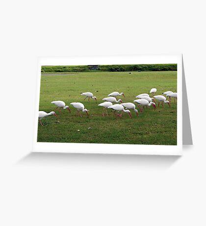 Birds Galore Greeting Card