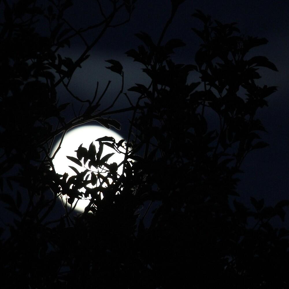 November Moon by Steiner62