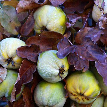 Fruit by sbc7