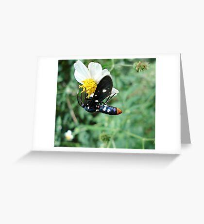Polka-dotted Wasp Moth Greeting Card