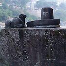 Shiva and Nandi..!! by Rahul Kapoor