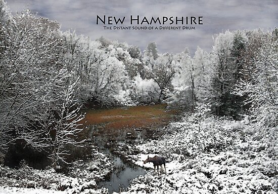 NH Different Drummer Poster Moose in a Baker River Oxbow by Wayne King