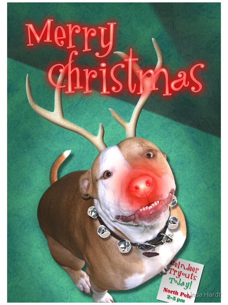 Boodolph - The Red-Nosed Pit Bull by Linda Hardt
