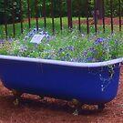 tub surprise by ANNABEL   S. ALENTON