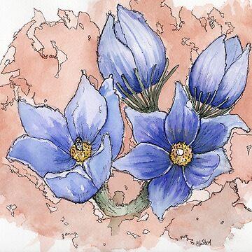 Prairie Crocus - Manitoba provincial flower by Ela Steel by elasteel