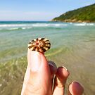 Colorful seashell at the beach by Helissa Grundemann