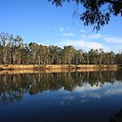 On the Banks of the Murray. by Fiona Kersey