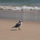 Along on the beach by Zina Stromberg