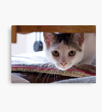 Georgie the kitten Canvas Print