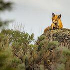 RESTFUL WATCHER by Sandy Hill