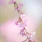 Abstract Higan Cherry Blossom Branch by Anita Pollak