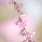 Abstrakte Higan Kirschblüten-Niederlassung von Anita Pollak