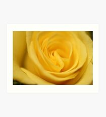 Flower: Yellow Rose I Art Print