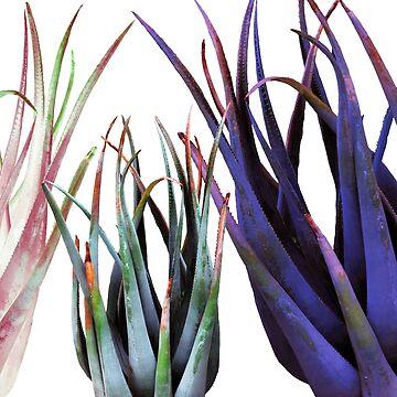 Aloe Vera Photgraphy  by Manitarka