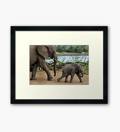 I CAN'T WALK FASTER ! - THE AFRICAN ELEPHANT – Loxodonta Africana Framed Print