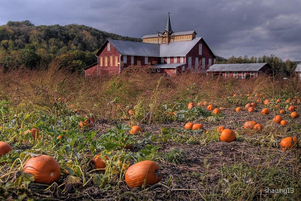 Pumpkin Farm by shawng13