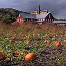 Pumpkin Farm by shawng13