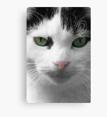 Cat with Green Eyes Canvas Print