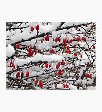 Snowy Morn No.2 Photographic Print