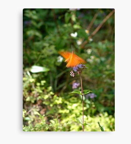 Beautiful Blur - the Butterfly as Abstract Art Canvas Print