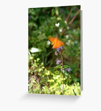 Beautiful Blur - the Butterfly as Abstract Art Greeting Card
