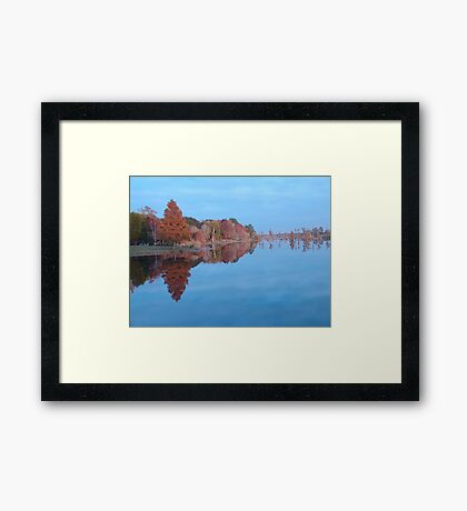 Cypresses on the Point - Autumn Framed Print