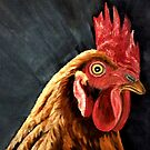 Little Red Hen - Close Up by EuniceWilkie