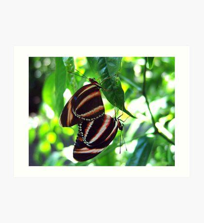 Orange Banded Butterflies - Cockrell Butterfly House Art Print