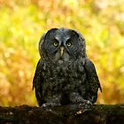 Owl Staring Contest by Heather King