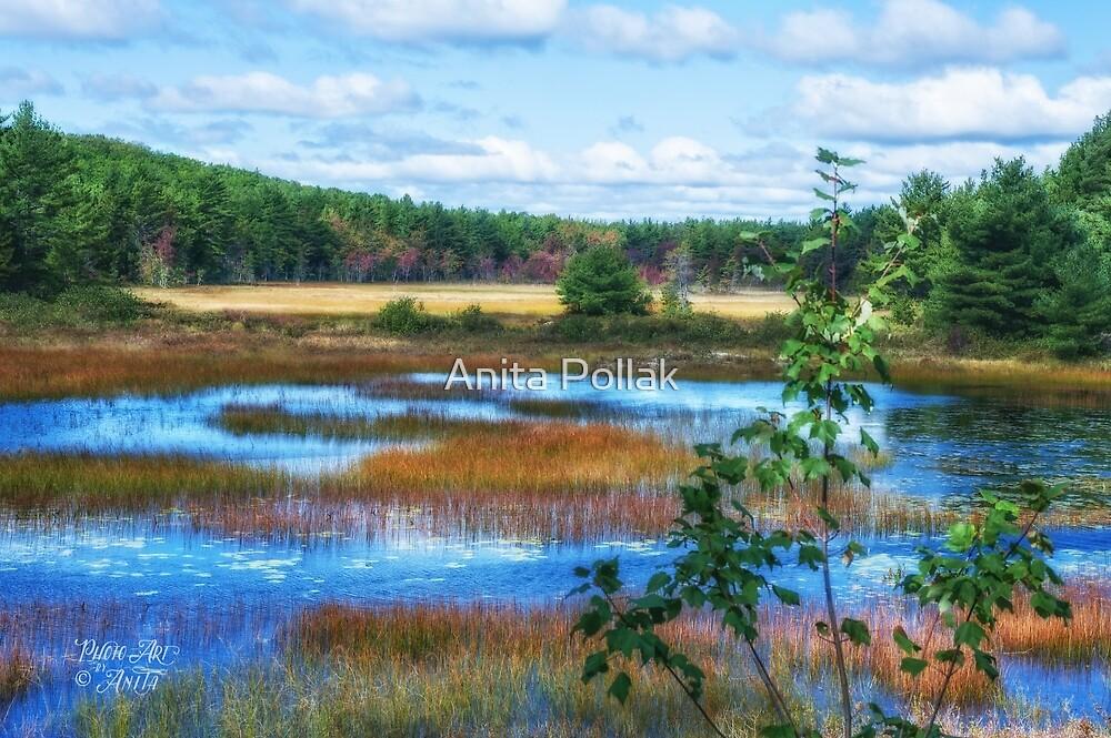 The Magic of Acadia by Anita Pollak