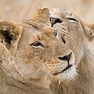 Lionesses Telling Secrets by Michael  Moss